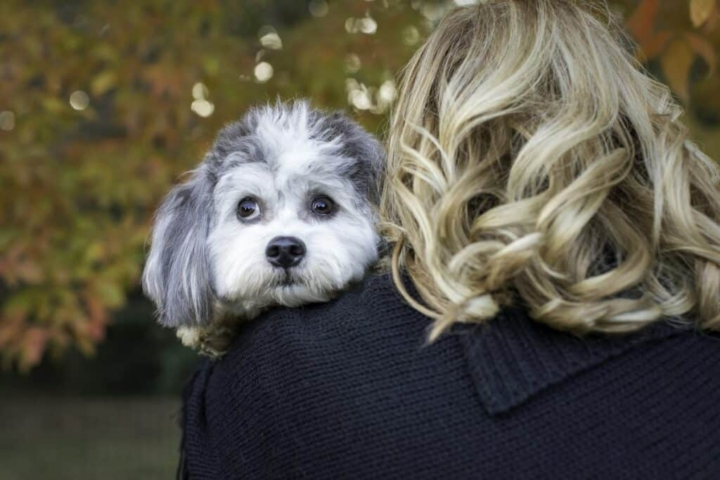 cute dog looking up at the sky while hugging mom
