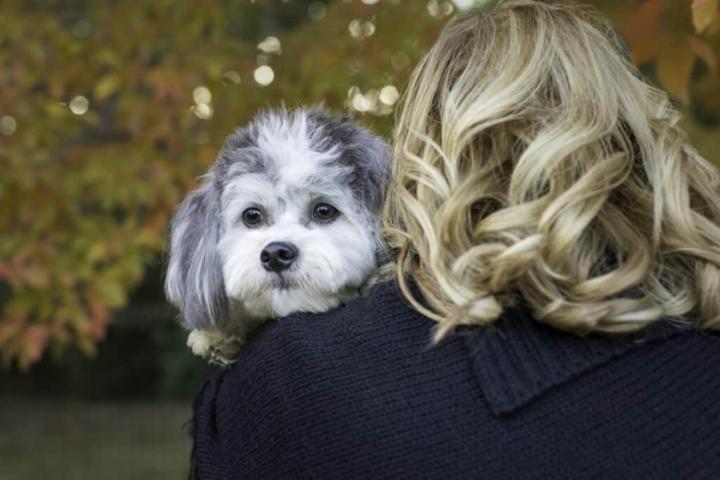 adorable doggy chi hugging human mom