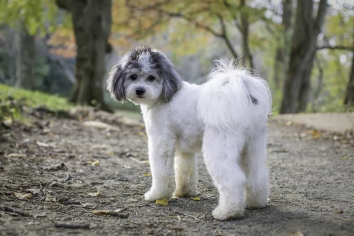 cute dog with fluffy tail looking back at the camera