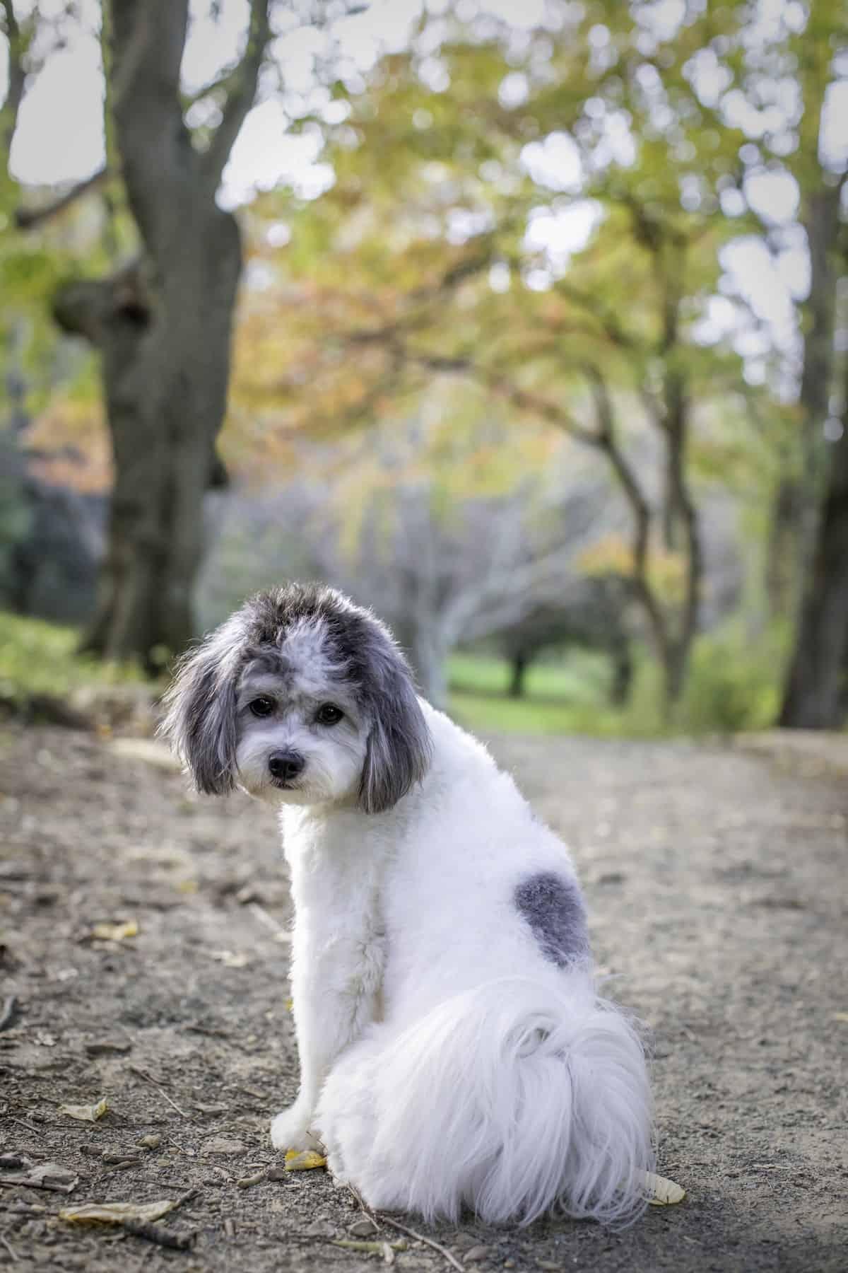 cute dog looking back at the camera