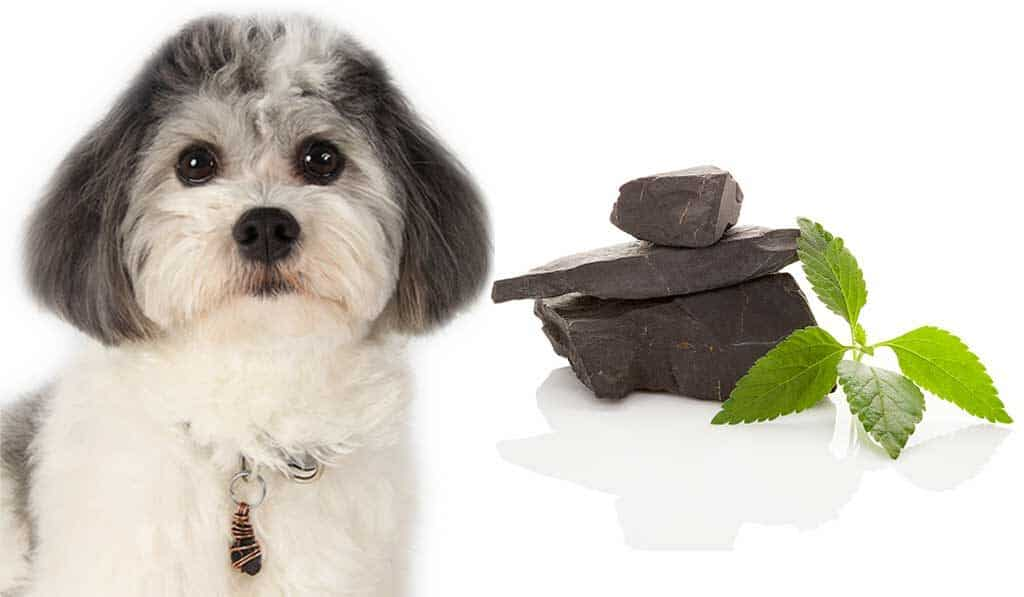 shungite-for-pet-health-that-doggy-chi-blog