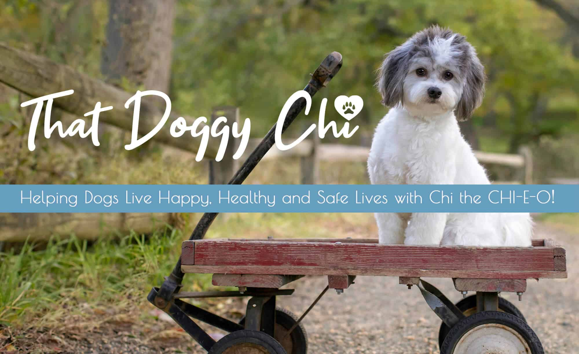 that-doggy-chi-homepage