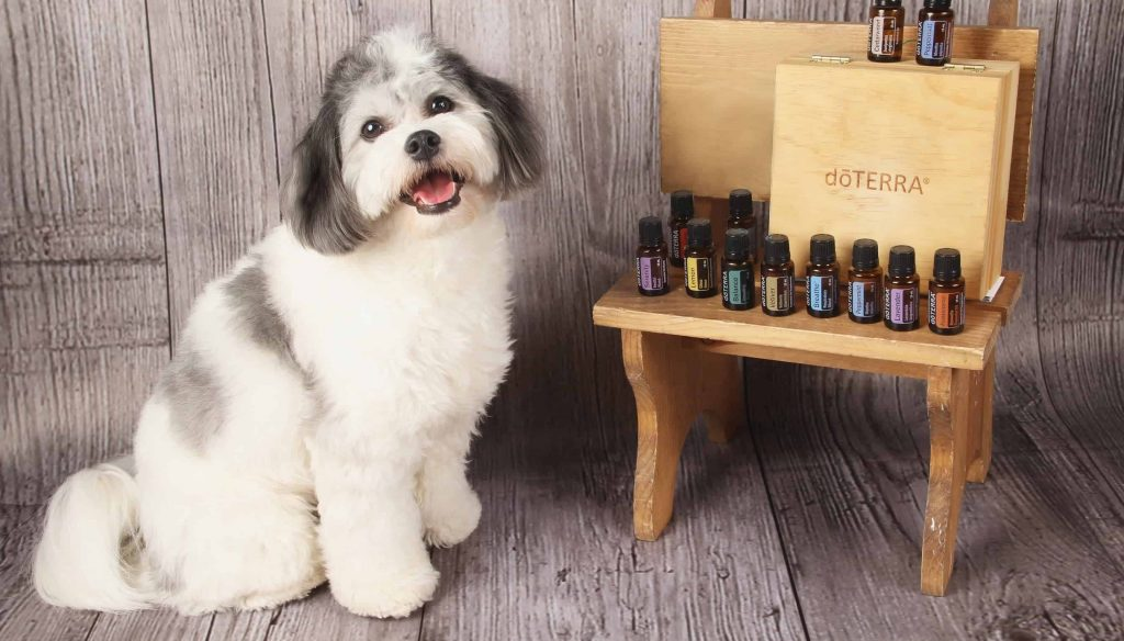 doterra-essential-oils-spoil-your-pet-that-doggy-chi