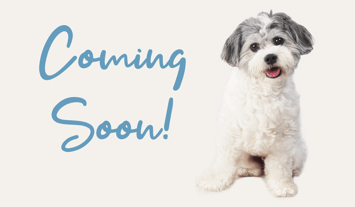 new-pet-products-coming-soon-to-that-doggy-chi