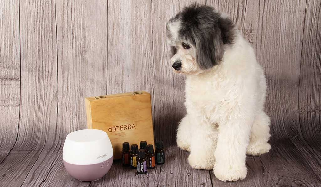 doterra-essential-oil-that-doggy-chi