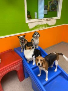 doggy daycare stairs
