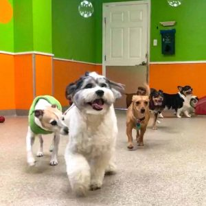 doggy daycare bubbles